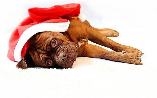 Il Natale per cani e gatti, come comportarsi