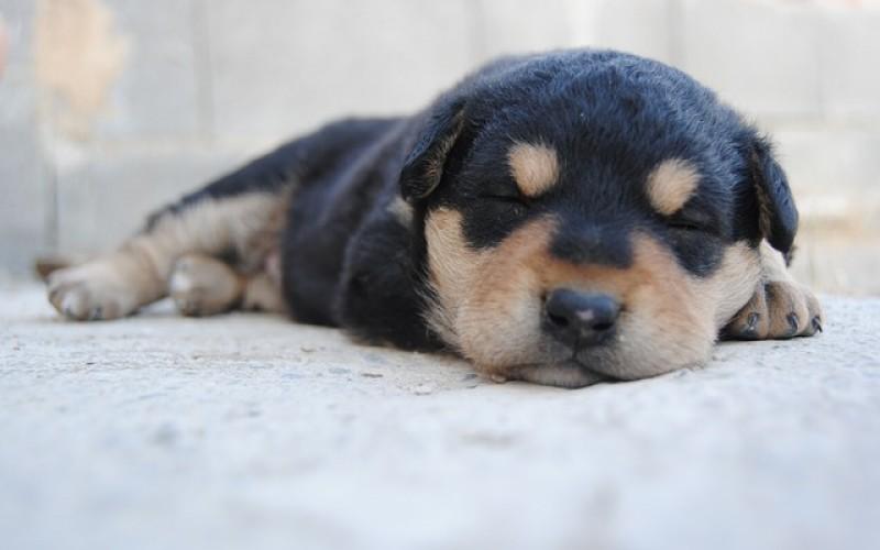Il sonno del cane