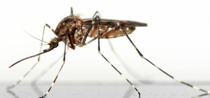 Tutte le informaziomi sul virus Zika