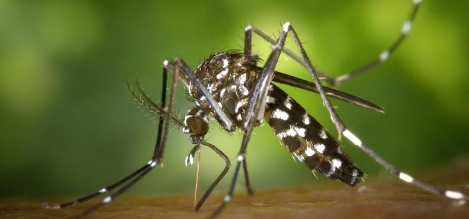 Zanzare e virus: prevenzione e cura con l'omeopatia