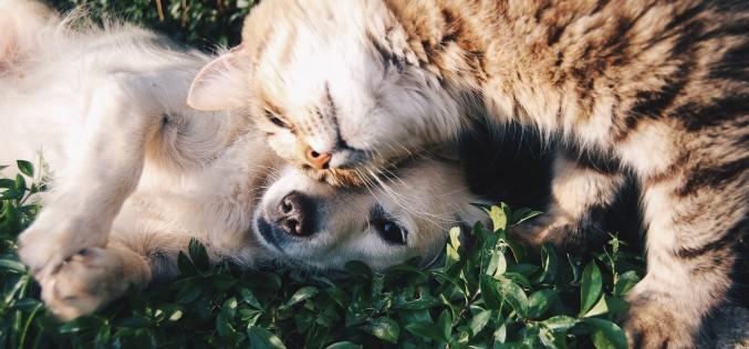 Come e quando separare i cuccioli dalla mamma senza traumi