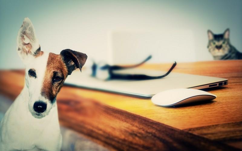 Come comunicare con cani e gatti