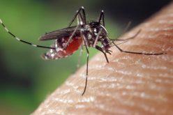 La chikungunya, la malattia virale acuta dal nome impronunciabile