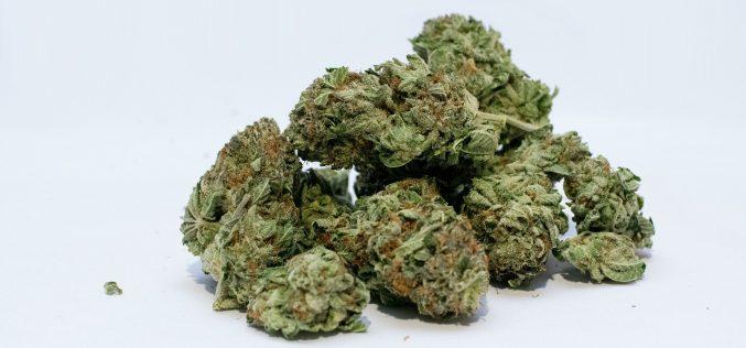 Cannabis light, è legale